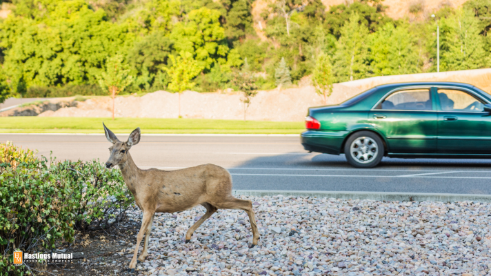 Deer in the road: drive carefully to avoid an accident.
