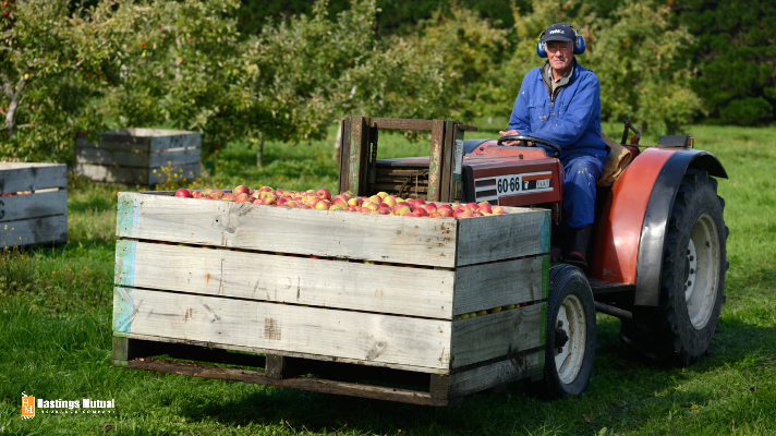 apple orchard farm worker driving tractor